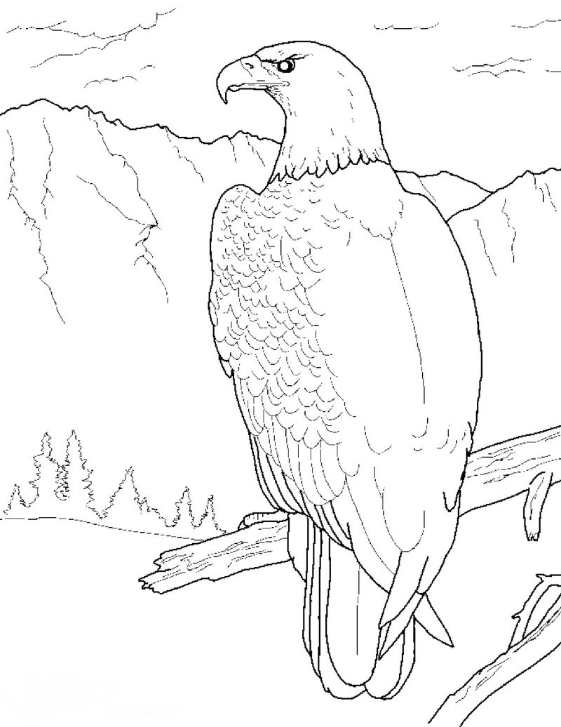 Coloring Pages Of A Eagle Head