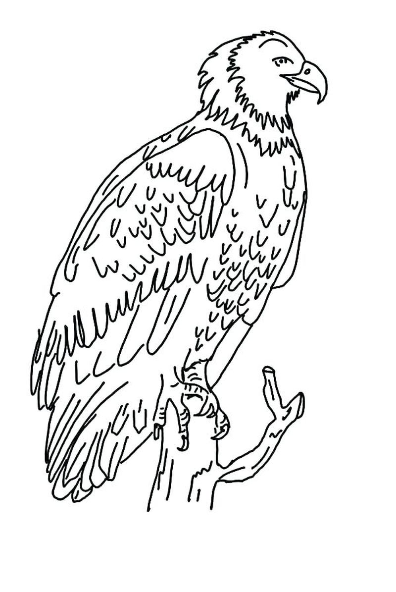 Coloring Pages Of A Golden Eagle