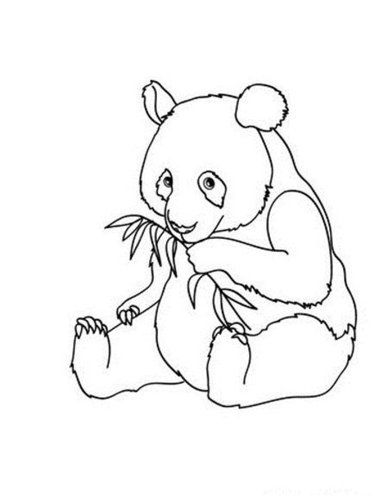 Coloring Pages Of A Panda