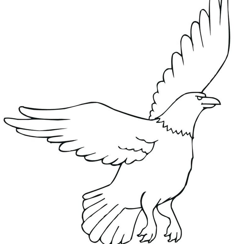 Coloring Pages Of American Bald Eagle
