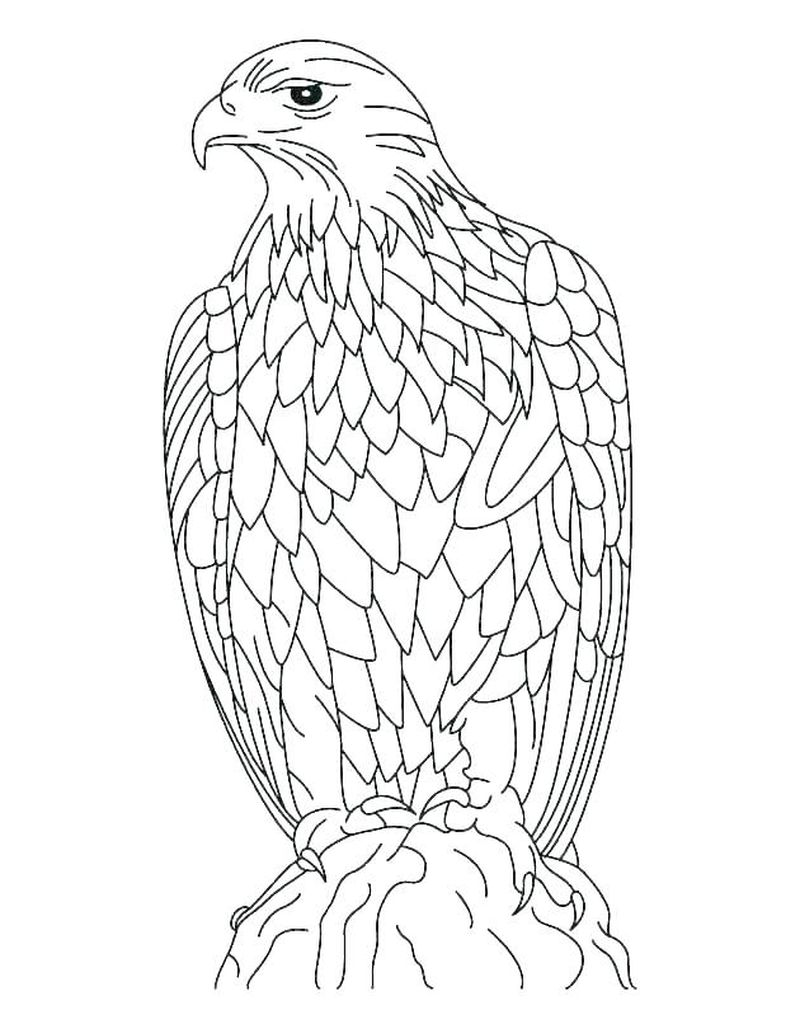 Coloring Pages Of An Eagle
