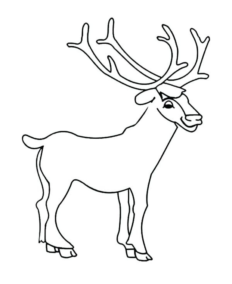 Coloring Pages Of Deer For Kids