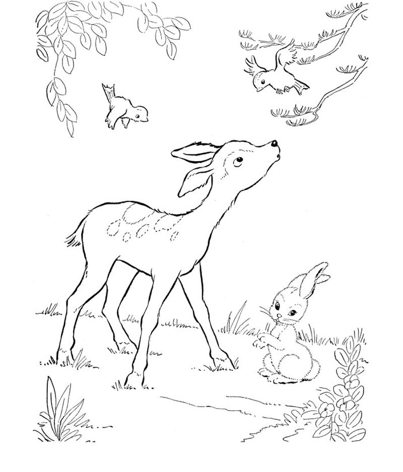 Coloring Pages Of Deer Heads