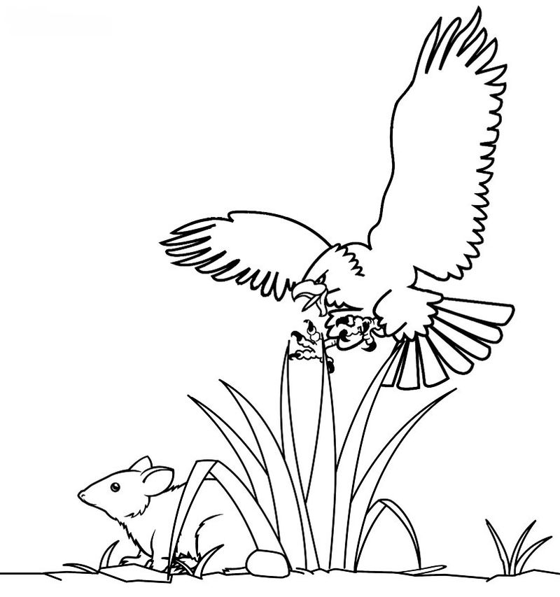 Coloring Pages Of Eagle Feather