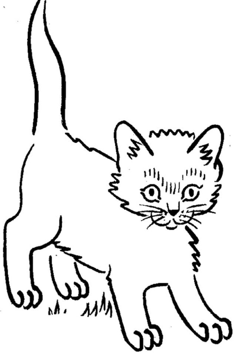 Coloring Pages Of Pet Cats