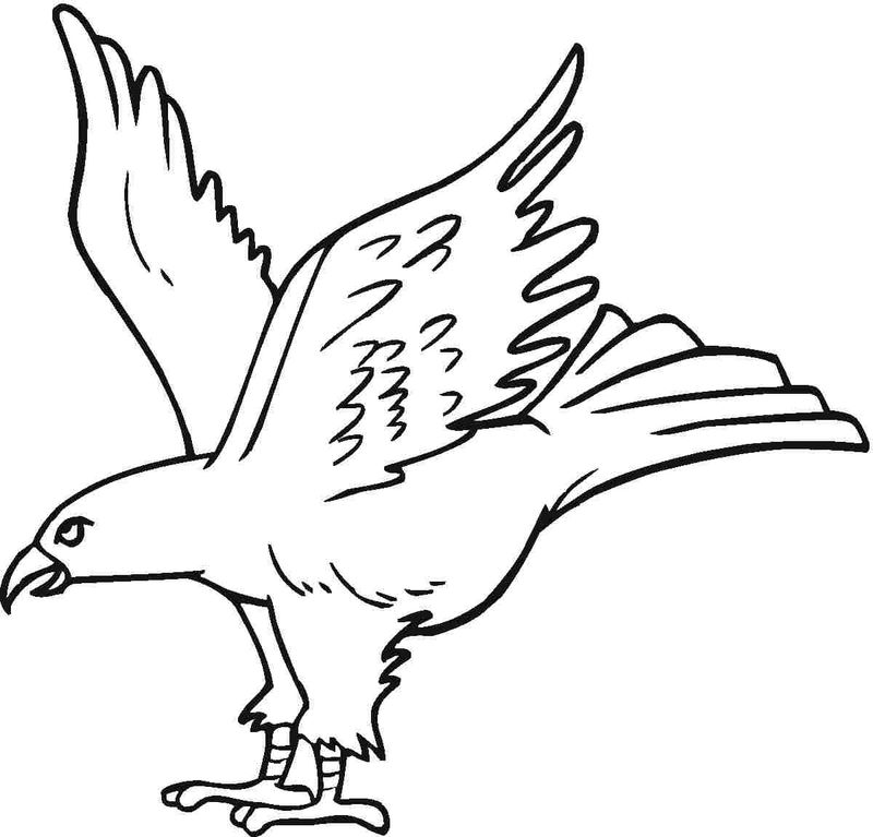 Coloring Pages Of The Eagle