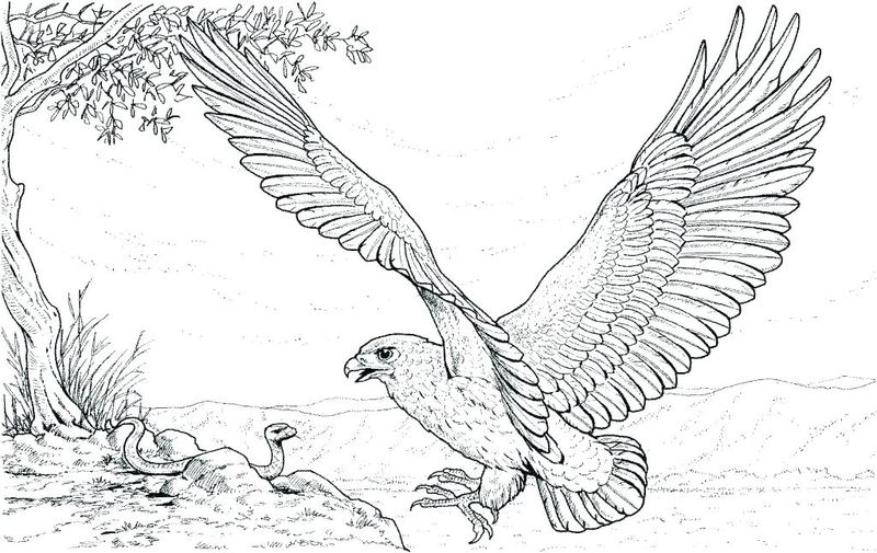Coloring Pages Realistic Animals