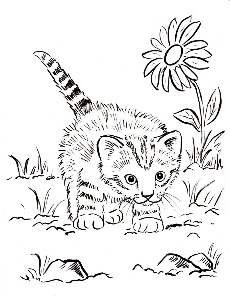 Colouring Pages Cats Kittens