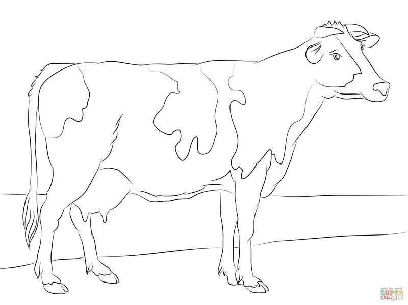 Cow Being Milked Coloring Pages