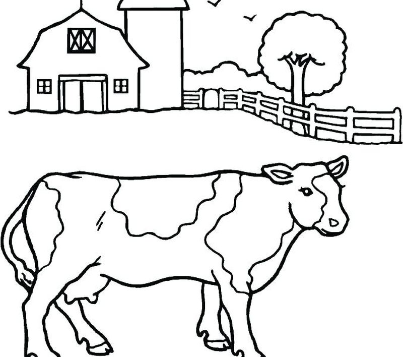 Cow Coloring Pages Easy