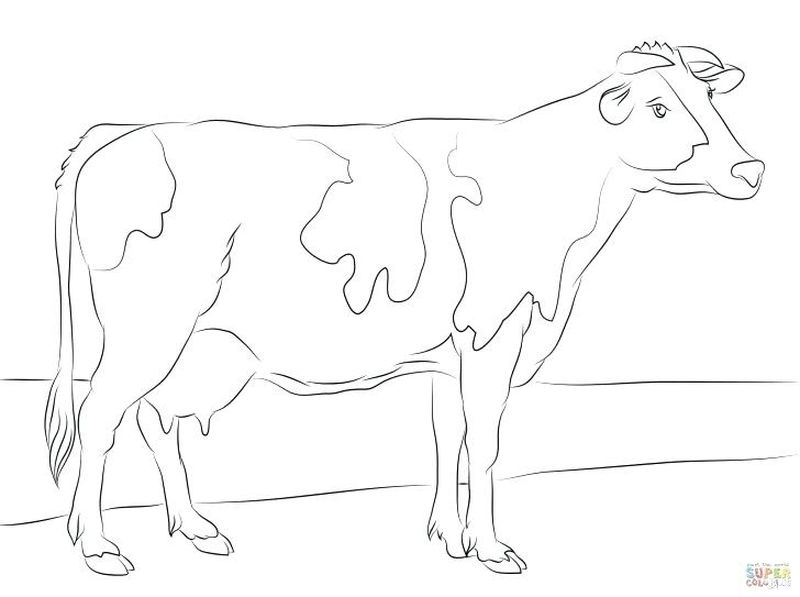 Cow Coloring Pages For Children Cow