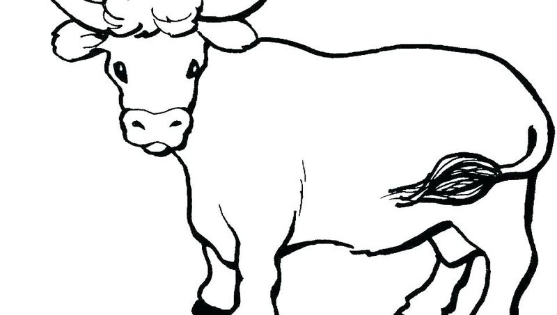 Cow Coloring Pages For Kids Printable