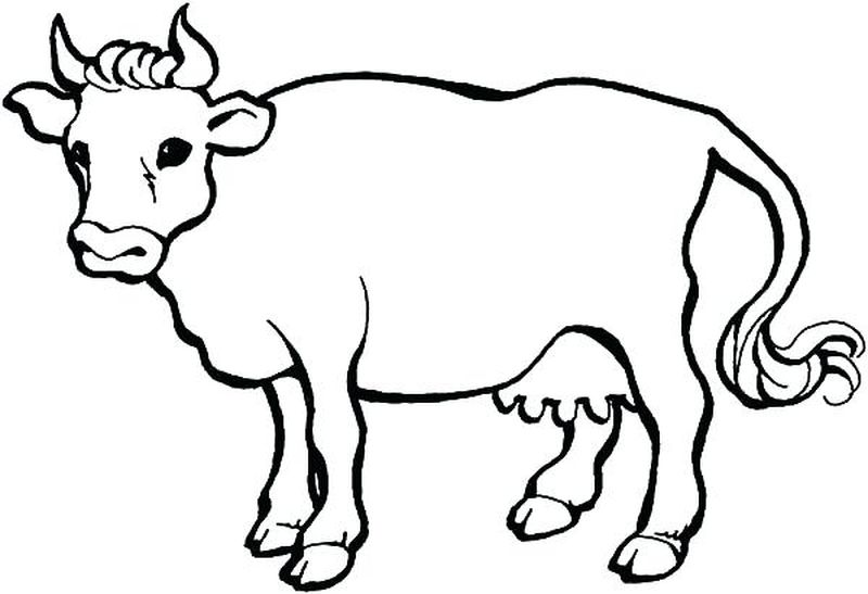 Cow Coloring Pages For Preschool