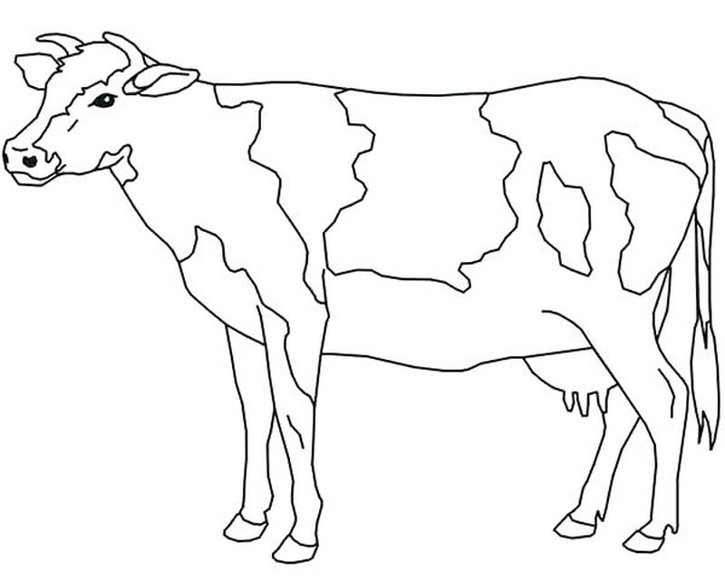 Cow Coloring Pages Free