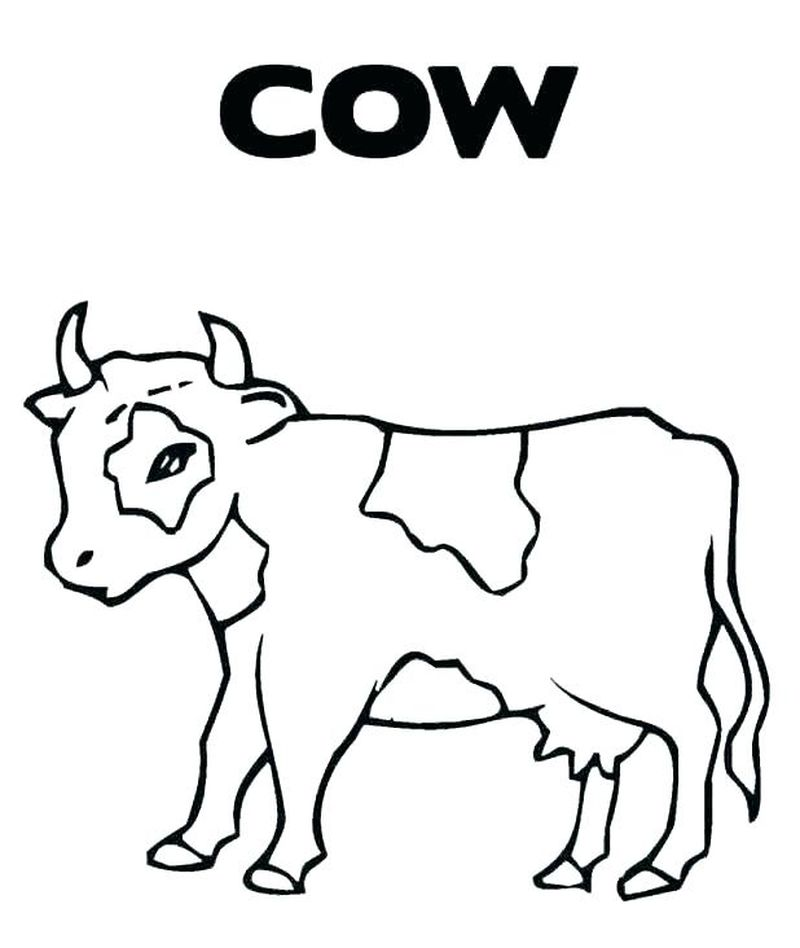 Cow Coloring Pages Images
