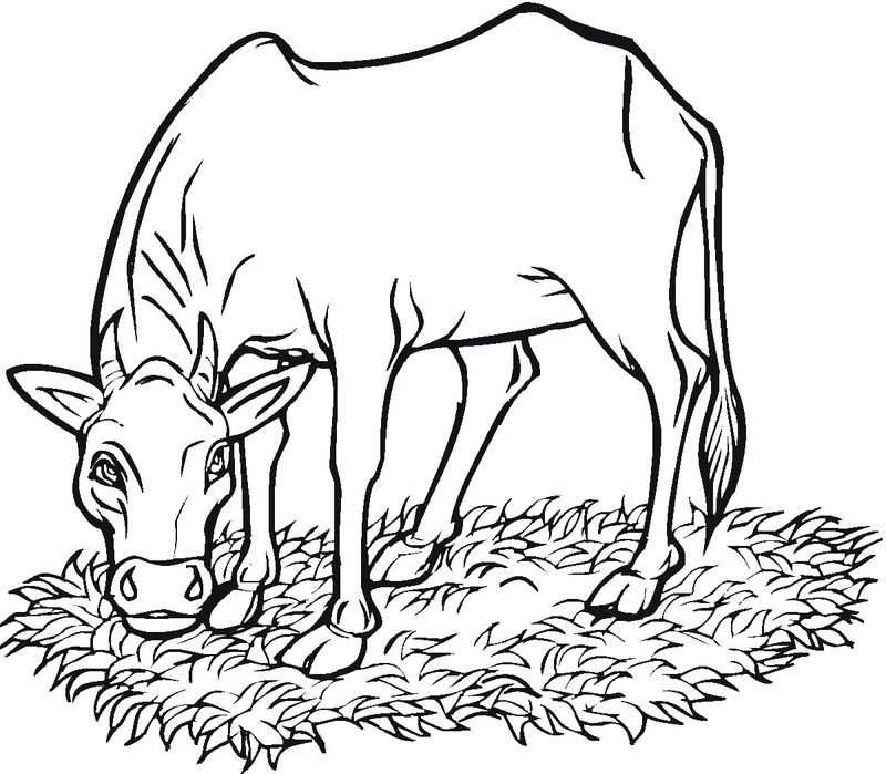 Cow Coloring Pages Printable For Preschoolers