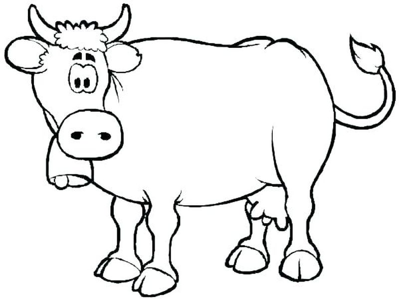 Cow Cow Cow Coloring Pages Kids