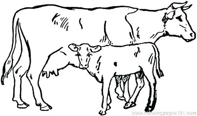 Cow Head Coloring Pages