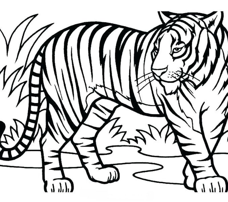 Daniel Tiger Characters Coloring Pages