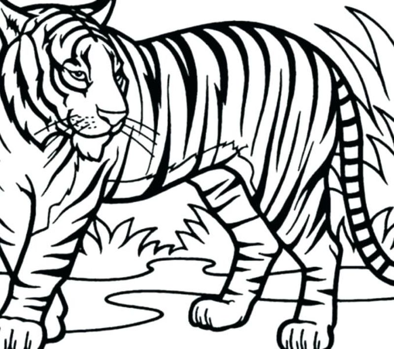 Daniel Tiger Coloring Pages Pdf