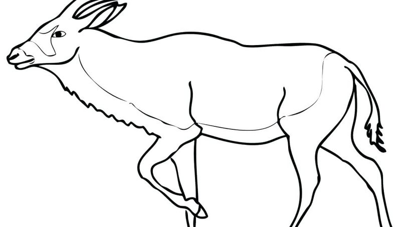 Deer And Fawn Coloring Pages
