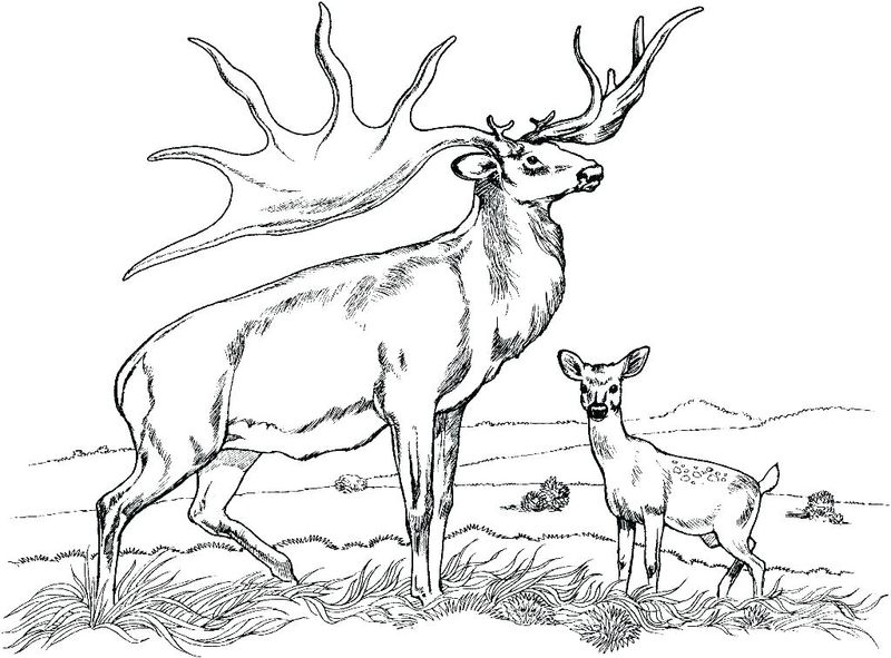 Deer Coloring Book Pages
