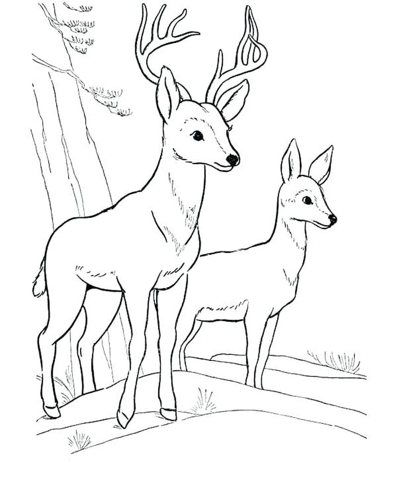 Deer Coloring Pages Christmas