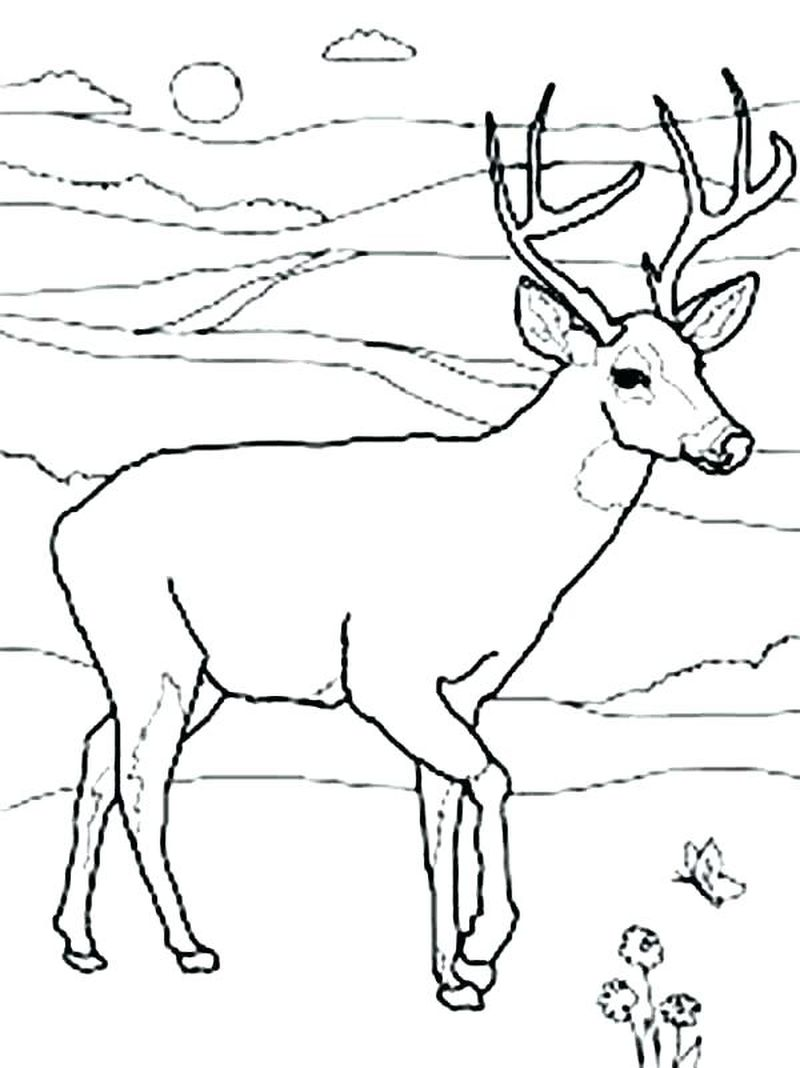 Deer Coloring Pages Easy