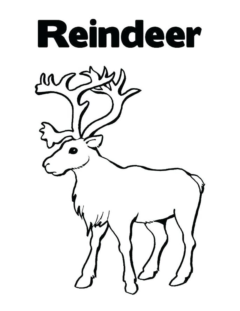 Deer Coloring Pages For Kids Free