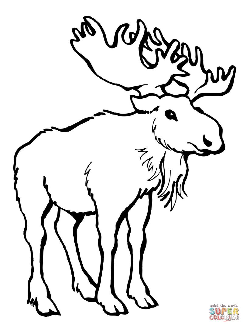 Deer Coloring Pages With Color