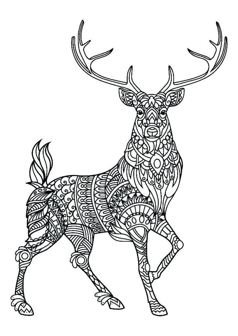 Deer Colouring In Pages