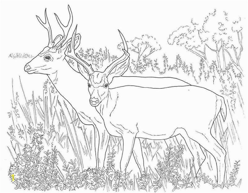 Deer Images Coloring Pages