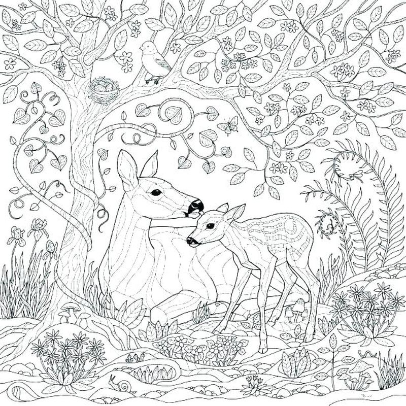 Deer In The Woods Coloring Pages