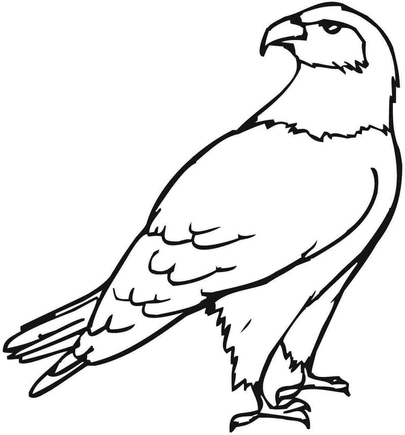 Detailed Eagle Coloring Pages For Adults