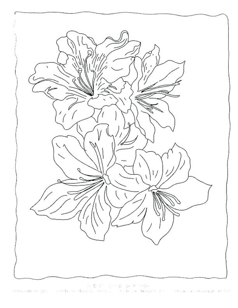 Detailed Flowers Coloring Pages