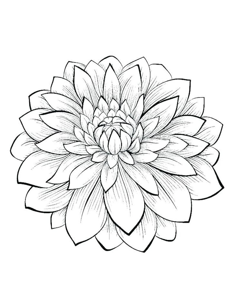 Different Types Of Flowers Coloring Pages