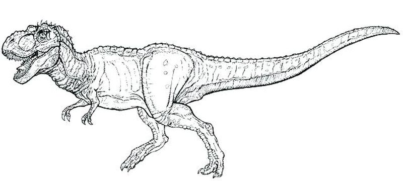 Dinosaur Coloring Pages For Kids Online