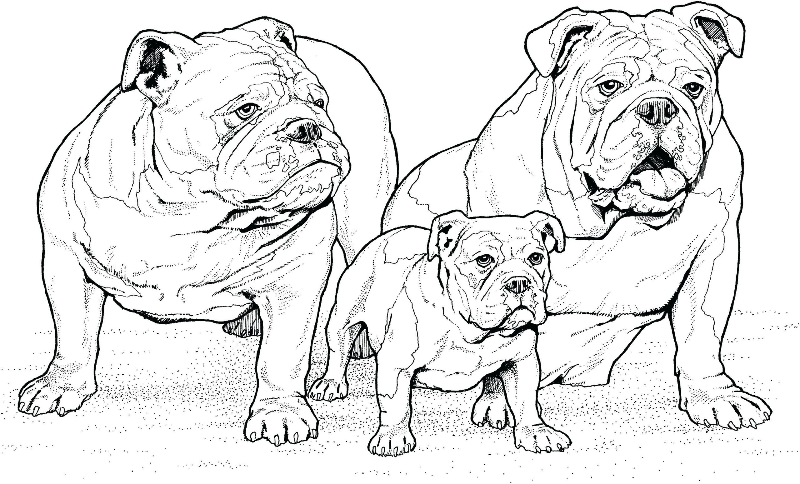 Dog Coloring Pages That Look Real