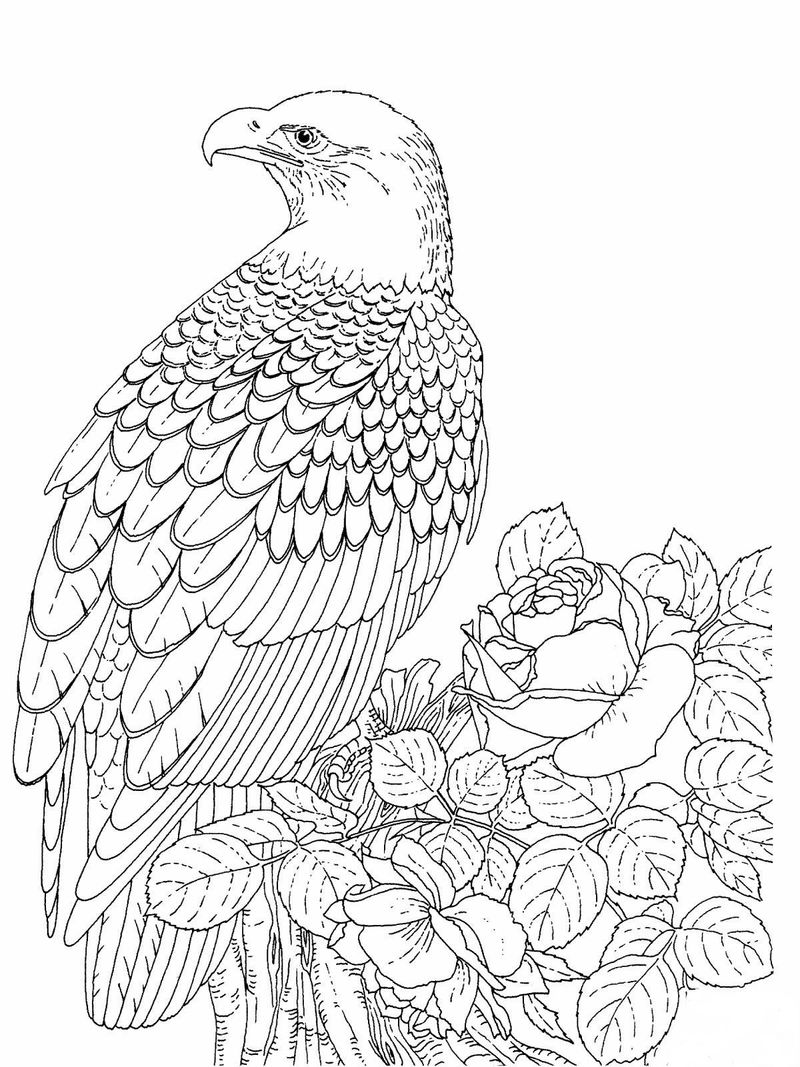 Eagle Coloring Pages For Adults