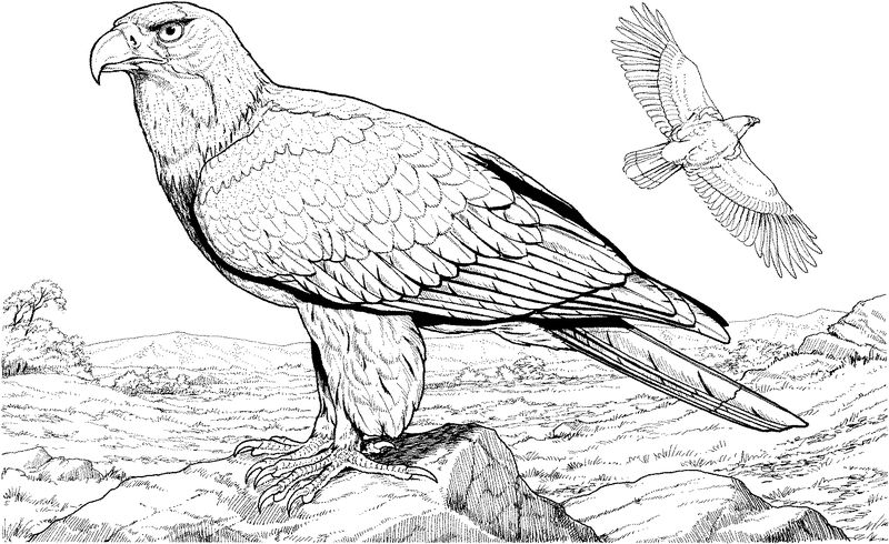 Eagle Coloring Pages Free