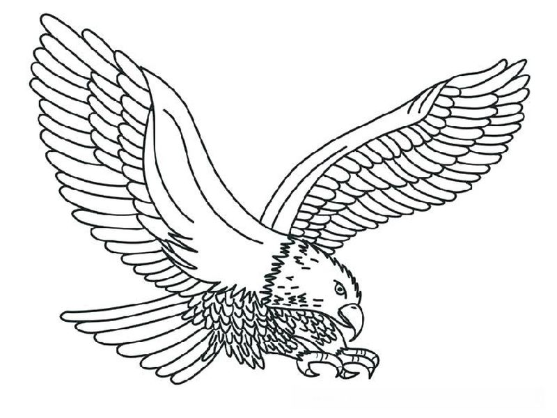 Eagle Colouring In Pages