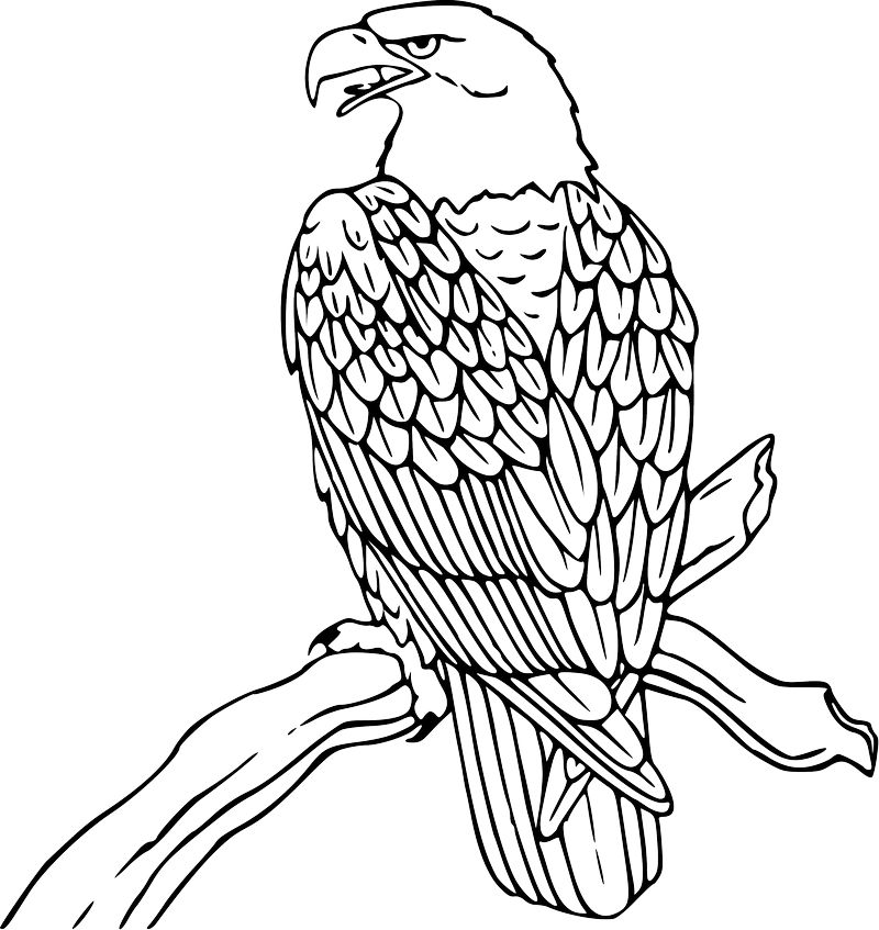 Eagle Colouring Pages Printable