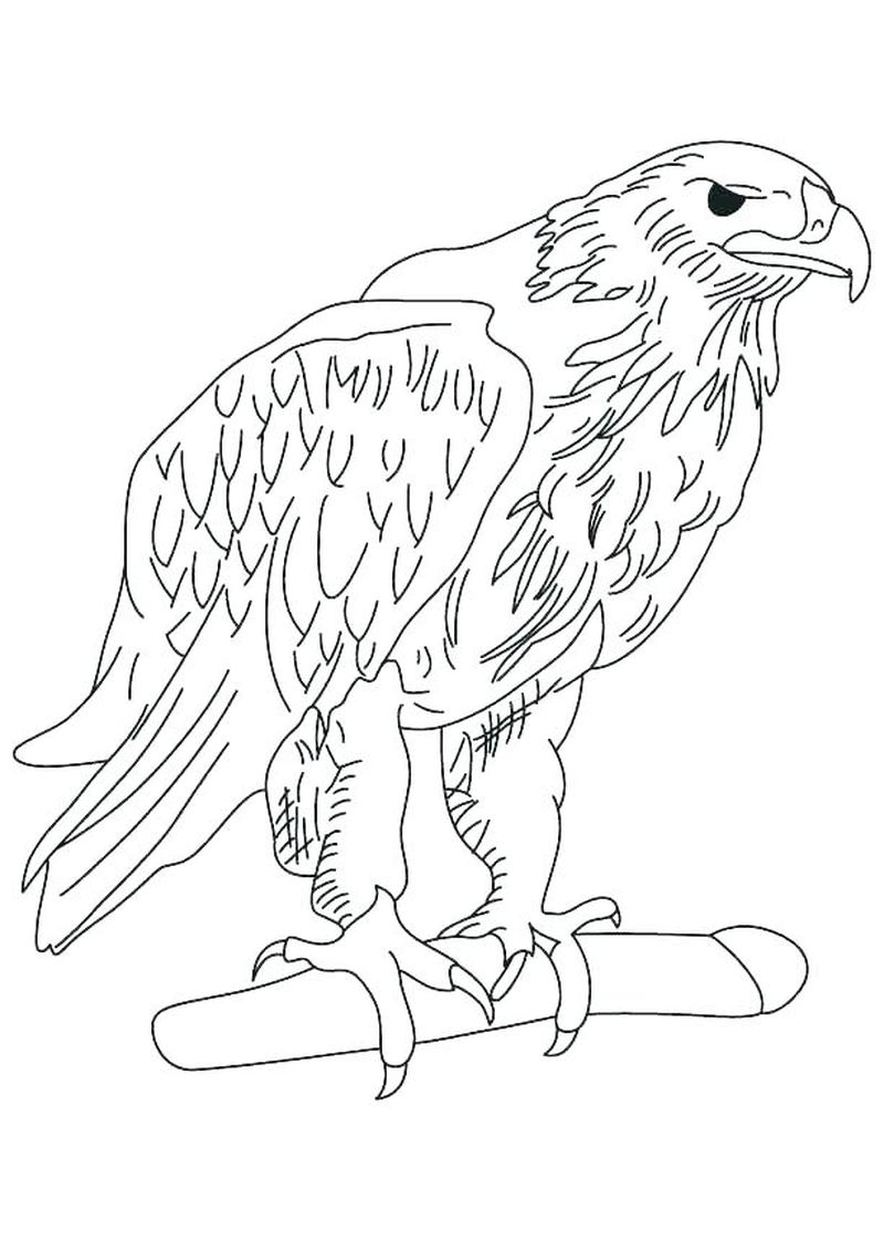 Eagle Football Coloring Pages