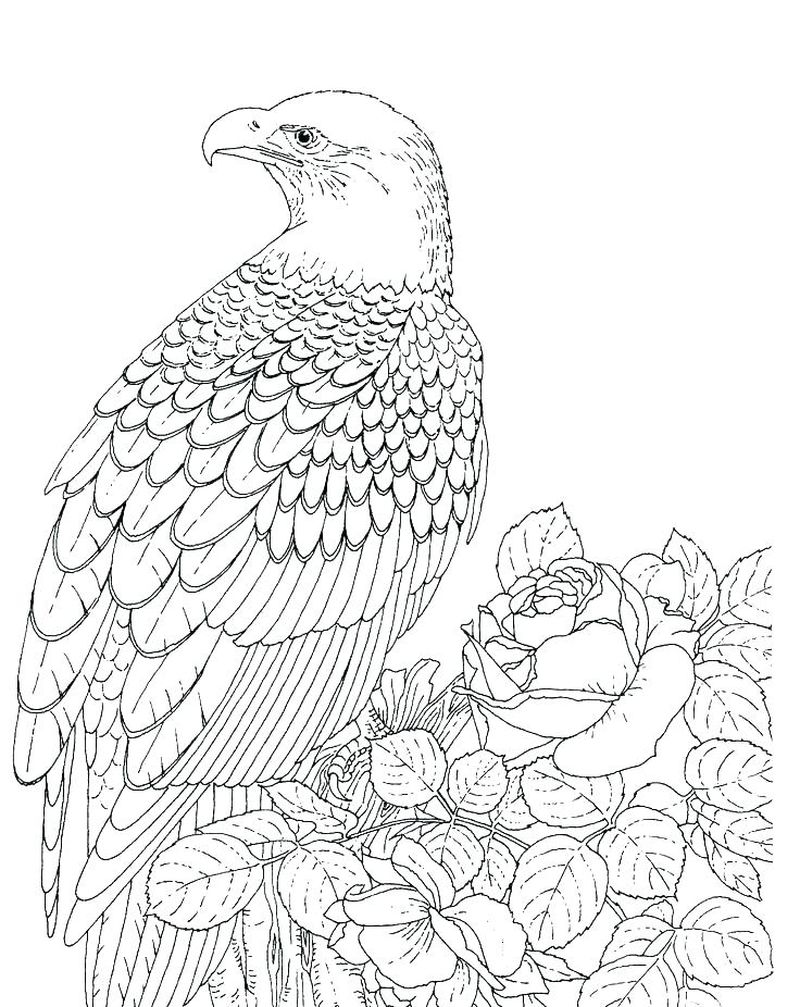 Eagle Head Free Coloring Pages