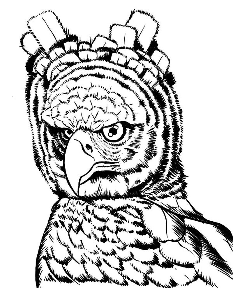 Eagle Scout Coloring Pages