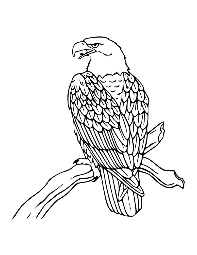 Easy Eagle Coloring Pages