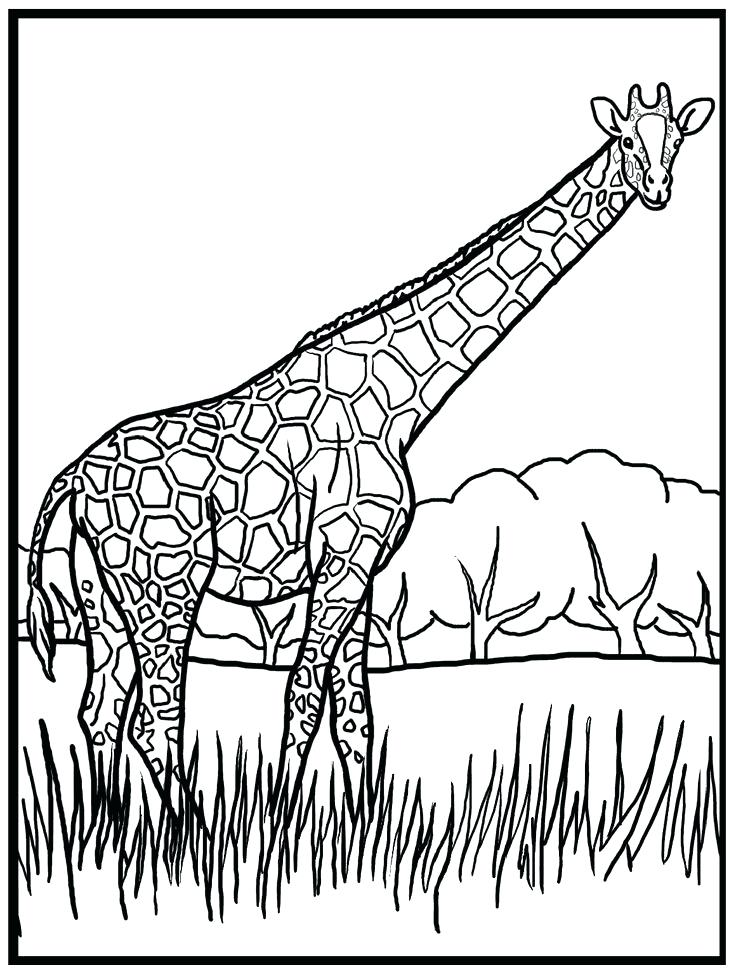 Easy Giraffe Coloring Pages
