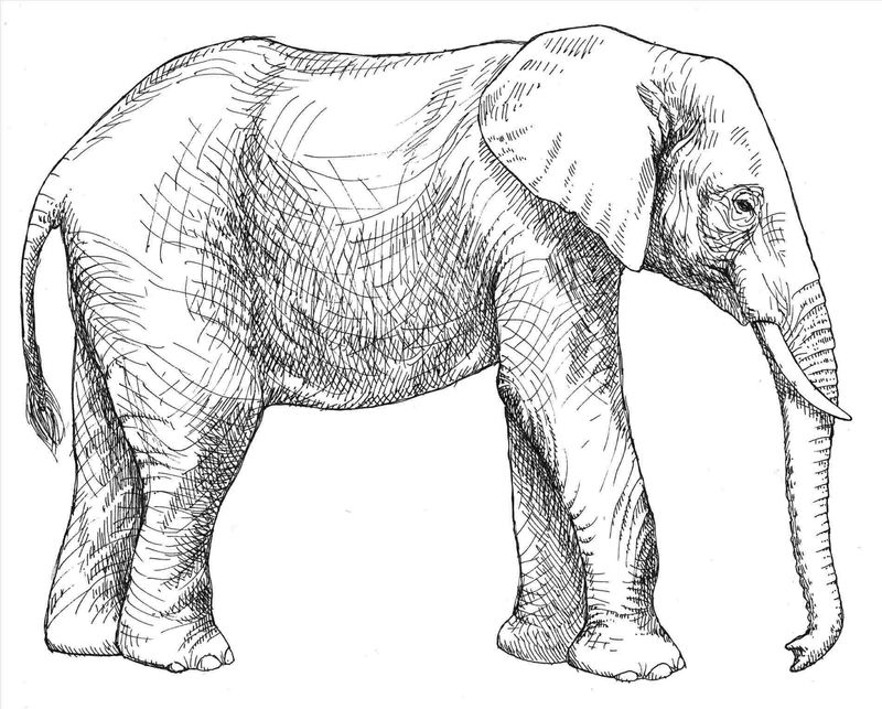 Elephant Coloring Pages Dumbo