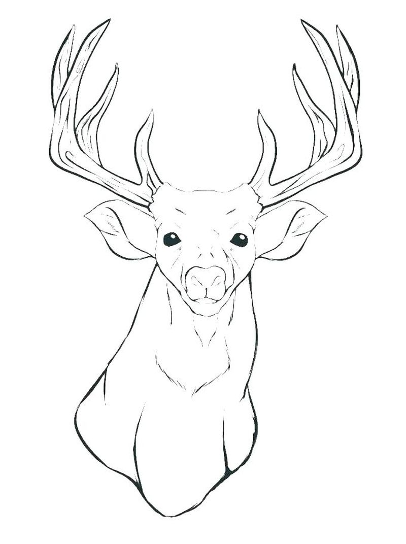 Female Deer Coloring Pages