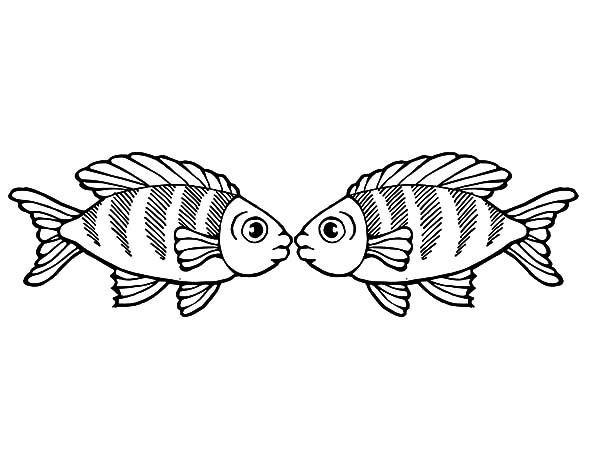 Fish Coloring Page Simple